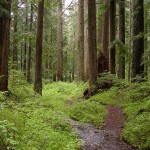 Creek_and_old-growth_forest-Larch_Mountain